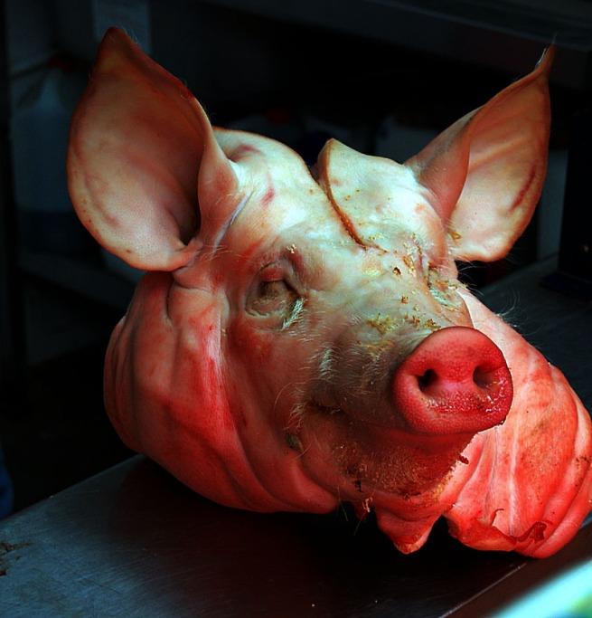 4-you-pig